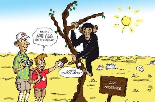 Article : Côte d'Ivoire : les chimpanzés et les éléphants menacés par le cacao